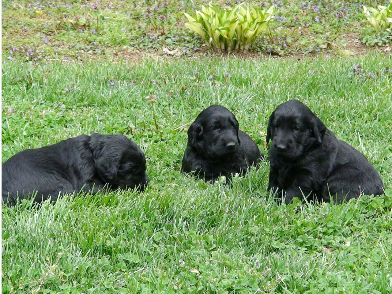 puppies1_d26.JPG
