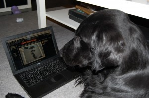 Sune watching his puppies on the webcam