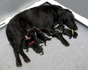 Nursing Pups